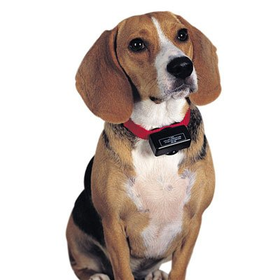 画像2: 自動で電流レベル調整 安心して使える愛犬トレーニング首輪
